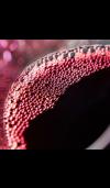 Blackberry Bordeaux Fragrance Oil