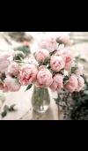 Evelyn Rose* Fragrance Oil