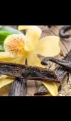 Vanilla Cedar - Natural Fragrance Oil