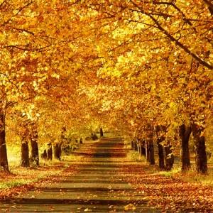 Autumn Breeze Fragrance Oil