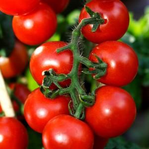 Farmer's Market Vine Ripe Tomato Fragrance Oil