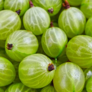 Gooseberry Guava Fragrance Oil