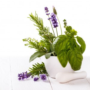 Lavender & Basil Fragrance Oil