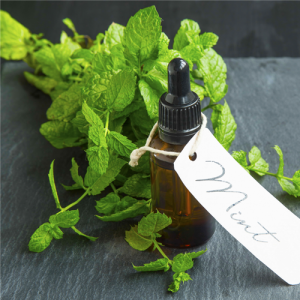 Purely Peppermint Fragrance Oil