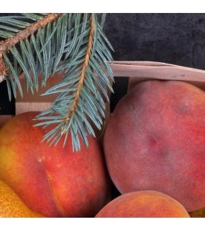 Silver Spruce & Empress Peach Fragrance Oil
