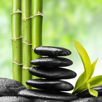 Bamboo Fragrance Oil