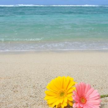 Beach Daisies Fragrance Oil
