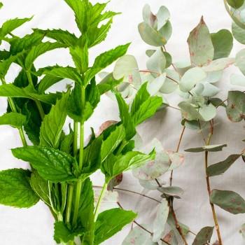 Eucalyptus & Spearmint Fragrance Oil