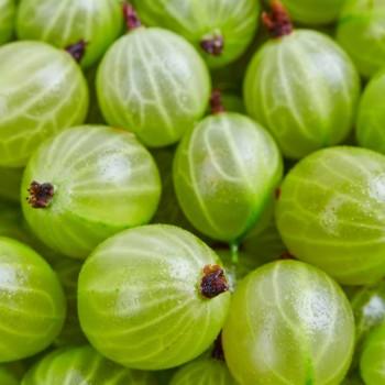 Gooseberry Guava Fragrance Oil