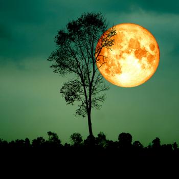 Harvest Moonlight Fragrance Oil