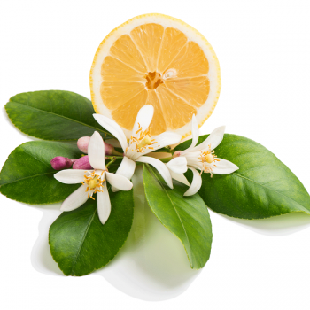 Honeysuckle Citrus - Natural Fragrance Oil