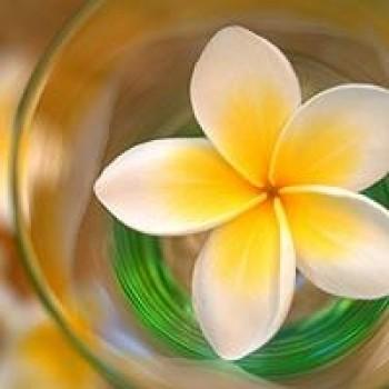 Island Nectar Fragrance Oil