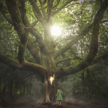 Mystical Woods Fragrance Oil